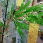 ここ数年、九品仏・自由が丘の名物となりつつある?! 七夕の時期に、子どもたちのTanabata Wishを笹の葉に飾ります。 学校の入り口に飾ってあるので、子どもたちのカワイイ文字に学校の前を通るご近所の方の目にも止まるのですが・・・願い事が「英語」で書いてあることに驚かれるようです(笑) ○○が欲しい、と書く子どももいますが、家族のこと、友達のこと、将来の夢のこと・・・などとてもポジティブな言葉があふれていて見ているこちらも嬉しくなります。こうした日常の中で英語にたくさん触れる、ということが使える英語力につながっていくのだと思います。